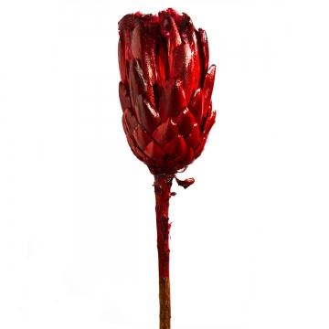 Repens Grandiceps mit Stiel Dark - Red lackiert    (100 Stück)