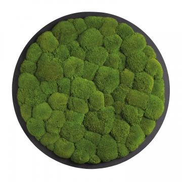 Moos•Moos Organic Rundbild aus `Ballenmoos´ Ø70cm präpariert in Apfelgrün auf schwarzem MDF mit Rahmen