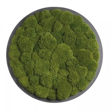 Moos•Moos Organic Rundbild aus `Ballenmoos´ präpariert in Waldgrün mit Edelstahlrahmen ( Ø 70cm )