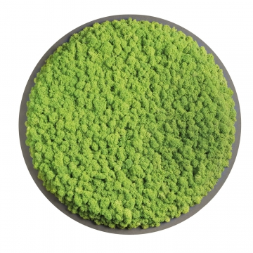 Moos•Moos Organic Rundbild aus `Islandmoos´ Ø 70cm präp. in Apfelgrün auf schwarzem MDF mit Rand