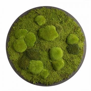 Moos•Moos Organic Rundbild aus `Ballenmoos und Grünmoos´ Ø70cm, präp. im Apfelgrün Mix auf schwarzem MDF mit Rahmen