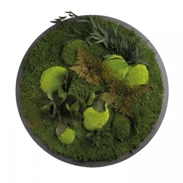 Moos•Moos Organic Rundbild mit Ballen-, Waldmoos und Pflanzen Ø70cm präp. im Waldgrün Mix auf schwarzem MDF mit Rand