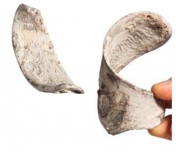 Elephant Ears in Stonewashed