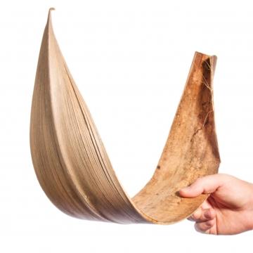 Galera Blatt gebogen in Natur [ca. 65-80cm]
