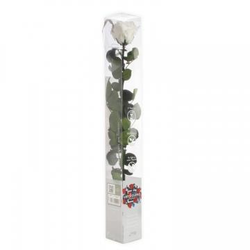 Rose mit Stiel in weiß, BIG in transparenter Geschenkbox Kopfgröße Ø 4,5-6cm