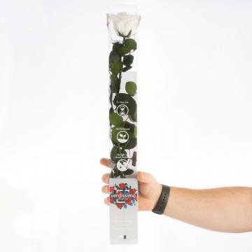 Rose ´Amarosa´ Groß ( 55cm ) Weiß mit Stiel in transparenter Geschenkbox