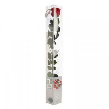 Rose mit Stiel in rot, BIG in transparenter Geschenkbox Kopfgröße Ø 4,5-6cm
