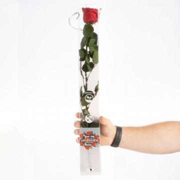 Rose ´Amarosa´ Groß ( 55cm ) Rot mit Stiel in transparenter Geschenkbox