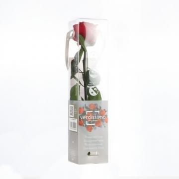 Rose ´Amarosa´ Klein ( 27,5cm ) Rot mit Stiel in transparenter Geschenkbox