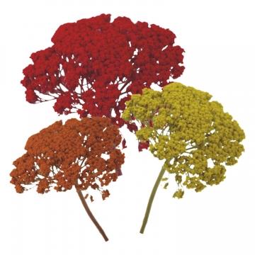 Schafgarbe Zweig 1+ im 3fach Farbmix  (5 Stück)