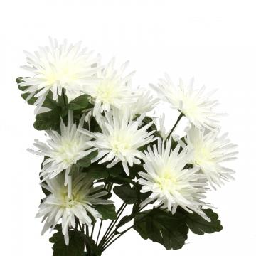 Strahlenchrysanthemen-Strauß Weiß (12 Stück)