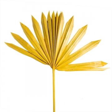 Sun Palm Cut mit Stiel in Gelb (250 Stück)