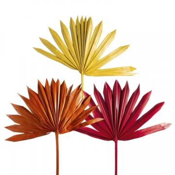 Sun Palm Cut mit Stiel im 3fach Farbmix   (250 Stück)