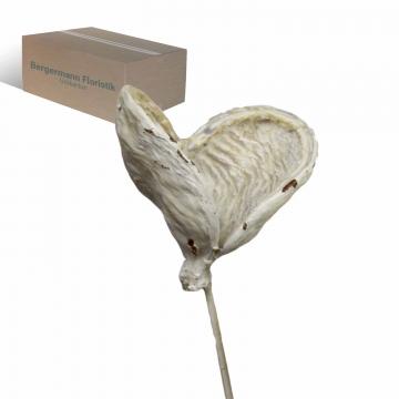 Badam am Stiel gewachst in Creme Weiß    (250 Stück)