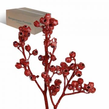 Eukalyptus Zweig mit Stiel gewachst in Rot Antik (350 Stück)