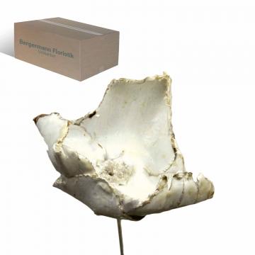 Palm Cup am Stiel gewachst in Creme Weiß     (250 Stück)