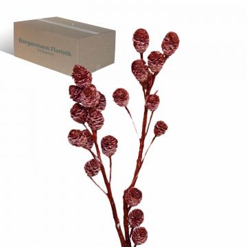 Strictum Zweig gewachst in Rot Antik (200 Stück)