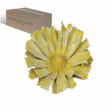 African Sun gewachst in gelb mit langem Naturstiel  (100 Stück)