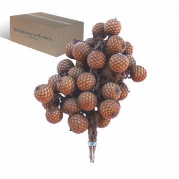 Rattan Fruchtstiel am Draht in Natur Gr. 15x10cm  (260 Stück)
