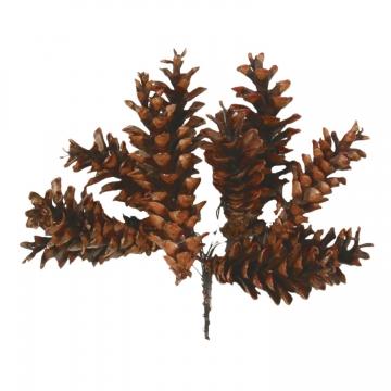 Weymouth Zapfen Natur am Draht gewachst (350 Stück)