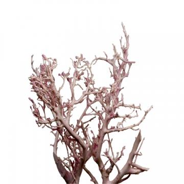 White Bush Geäst gewachst in Viola Ice (100 Stück)