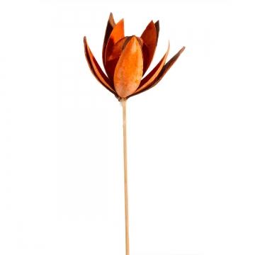 Wildlilie am Stiel in Orange (300 Stück)