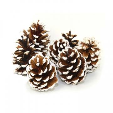 Winter Schwarzkiefer Zapfen (10 Stück)